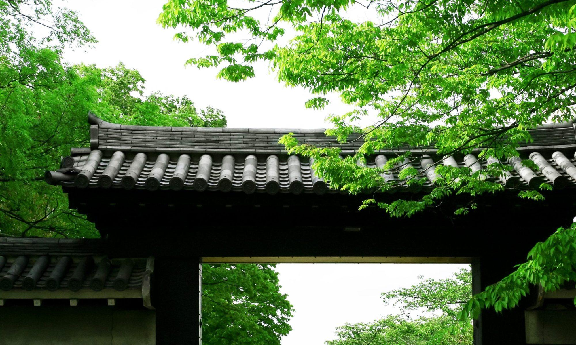 Orden de Musashi Shinobi Samurai